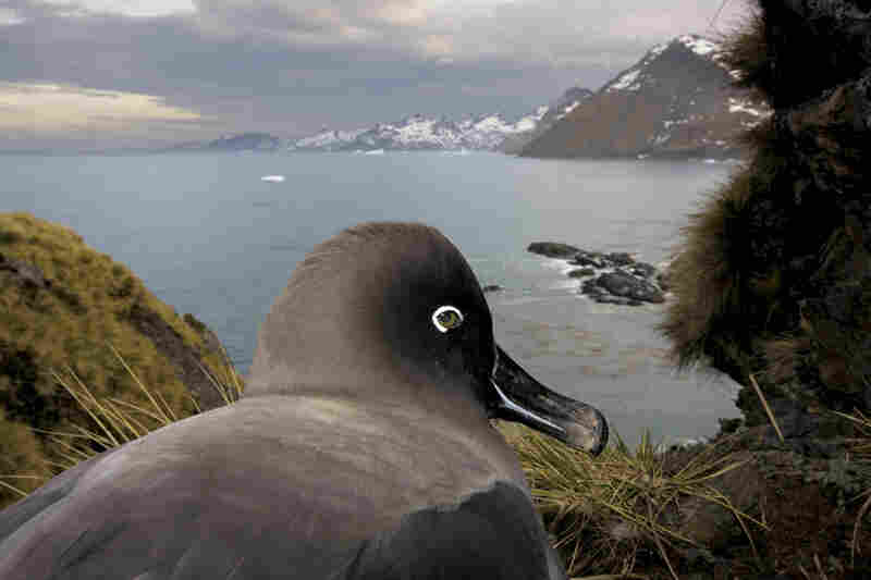 Nature stories, 1st prize: South Georgia, Antartica