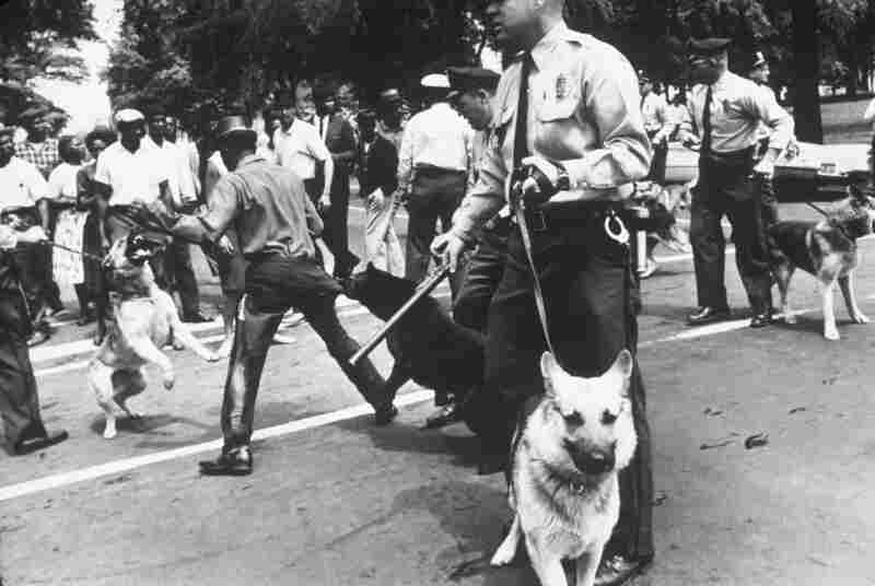 Police dogs attack a demonstrator during an anti-segregation protest. Birmingham, Ala., 1963