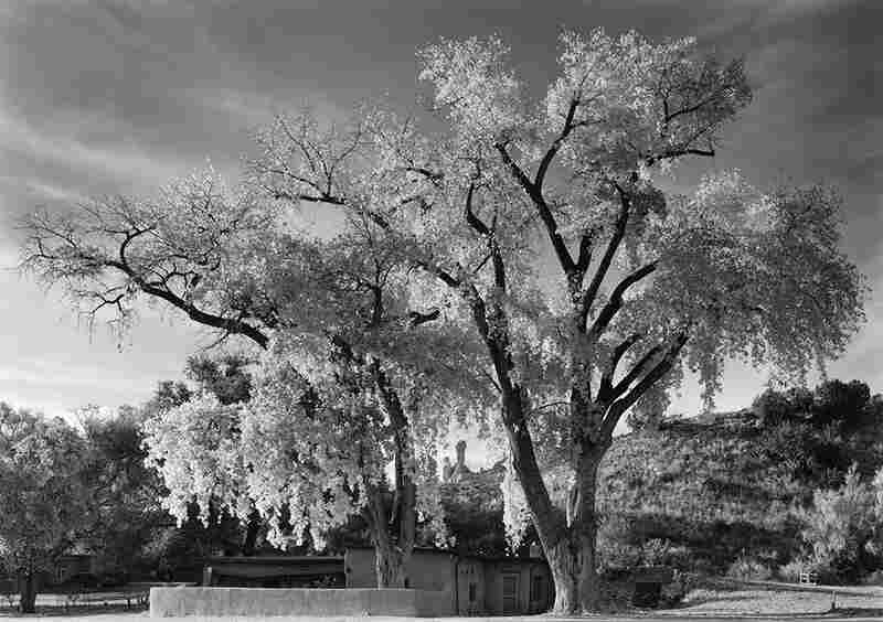 Ghost House and Cottonwoods, Autumn, 2006