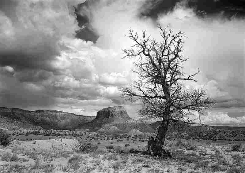 Black Tree and Orphan Mesa, 2005