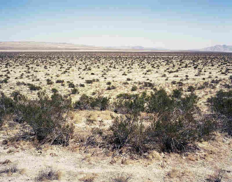 """Creosote Bush #0906-3905"" (12,000 years old; Mojave Desert, CA)"