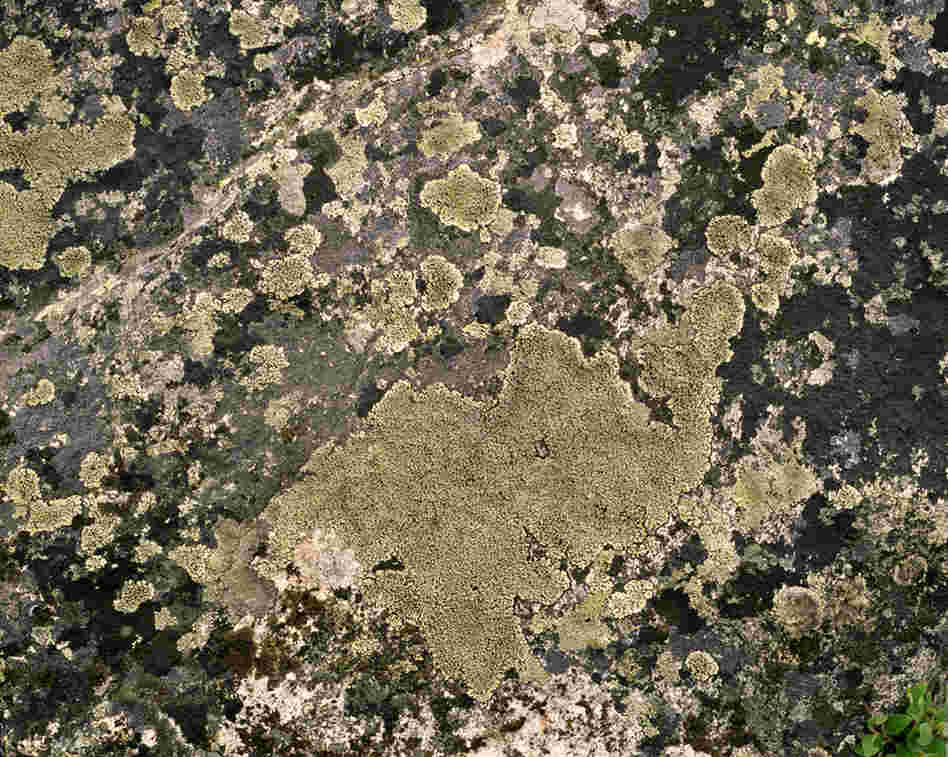 "Lichen R. Geographicum #0808-04A05 Approx. 3,000 years old; Alanngorsuaq, Greenland). Sussman said her time in Greenland was ""like traveling back in time."""
