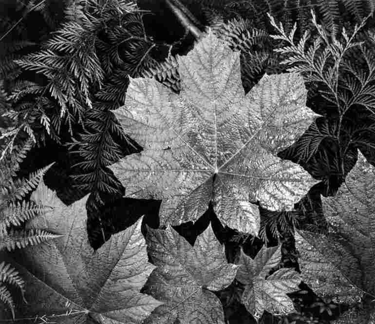 Leaves in Glacier National Park, Mont.
