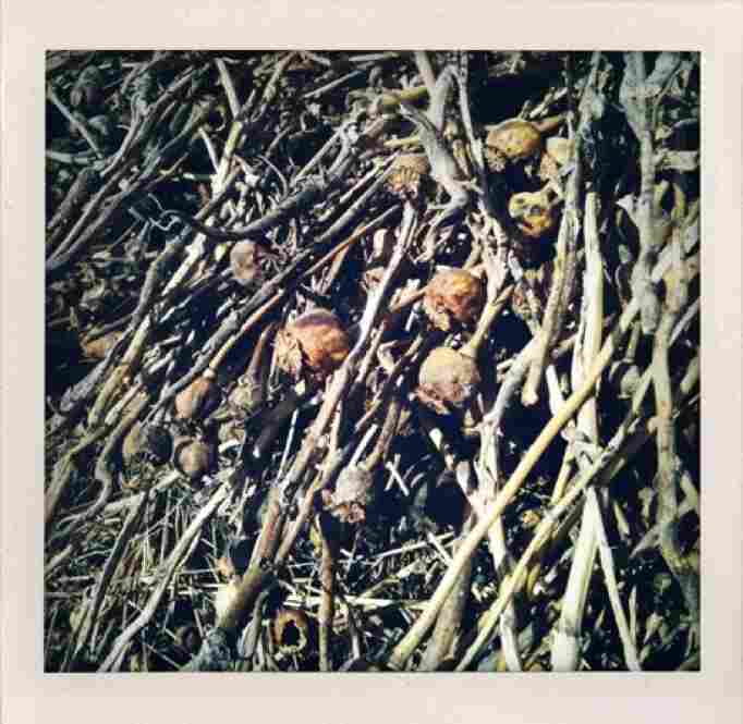 Dried poppies lay in a pile.