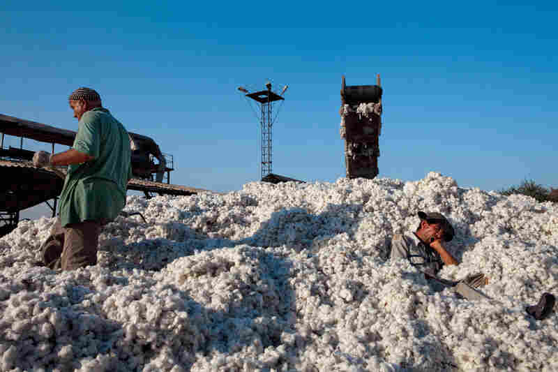 A sleepy worker takes a break in a pile of cotton at a plant in Qurghonteppa, Tajikistan — a staple of their economy and irrigated by glacial rivers.