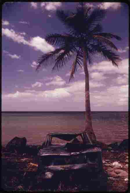An abandoned car sits under a palm tree at Rincon in Puerto Rico, February 1973.