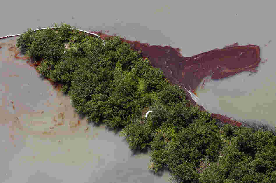 A bird flies over oil that has collected on wetlands on Elmer's Island in Grand Isle, La., May 20. The oil came inland despite oil booms that were placed at the wetlands' mouth on the Gulf of Mexico.