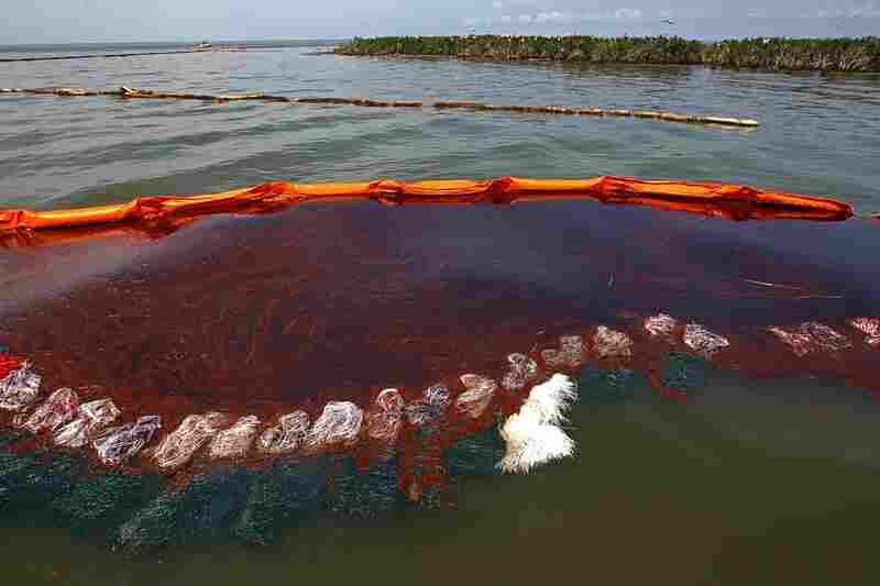 Heavy oil pools along the side of a boom just outside Cat Island in Grand Isle, La., June 6.