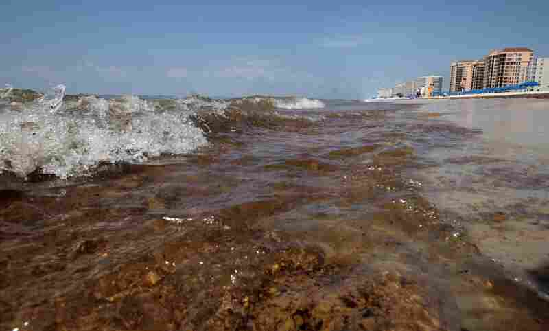Crude oil washes ashore in Orange Beach, Ala., on June 12. Oil slicks, 4 to 6 inches thick in some parts, have washed up along the Alabama coast.