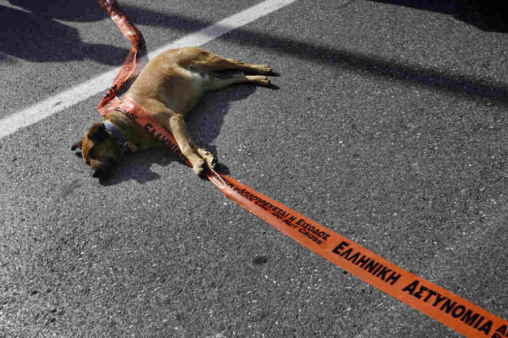A stray dog plays with a police line dur