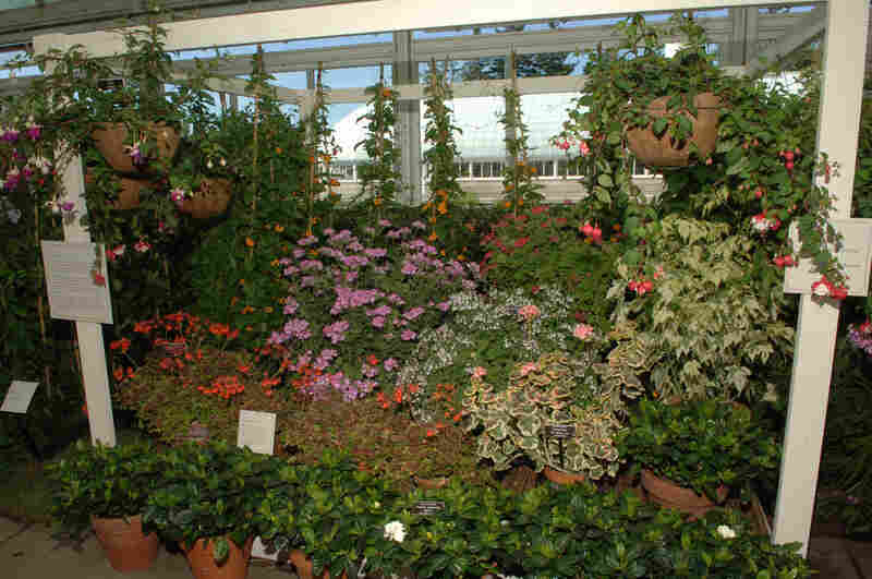 Camelias, fuschias, hyacinths, daffodils, gardenias, crocuses, primroses, heliotropes and dianthus were some of the plants Dickinson grew in her conservatory, which the New York Botanical Garden has re-created. The walls were lined with white shelves and hooks for potted and hanging plants, and in colder months, it was filled with exotic plants.