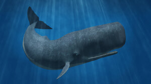 3D rendering of a sperm whale