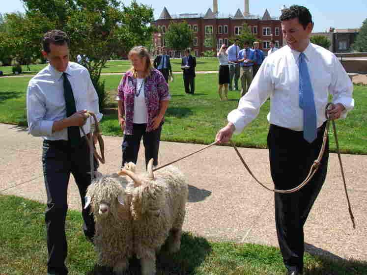 Congressmen And Goats