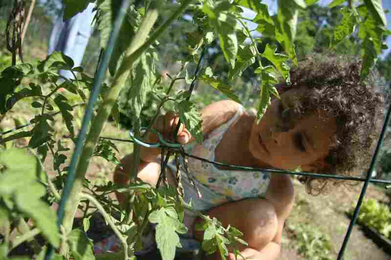 "Veda helps ""cage"" tomatoes. We Grew It, Let's Eat It also contains recipes."