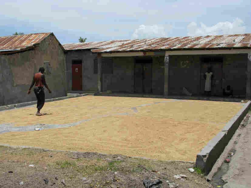 Haiti rice