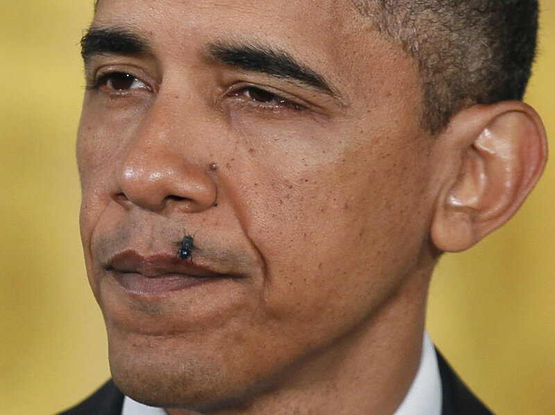 Image result for Obama, flies