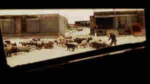 Kandahar street scene