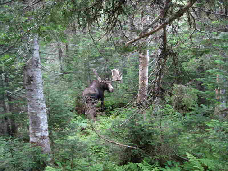 """""""You see the icebergs floating by, the moose, and it's real simple,"""" Bailey says."""