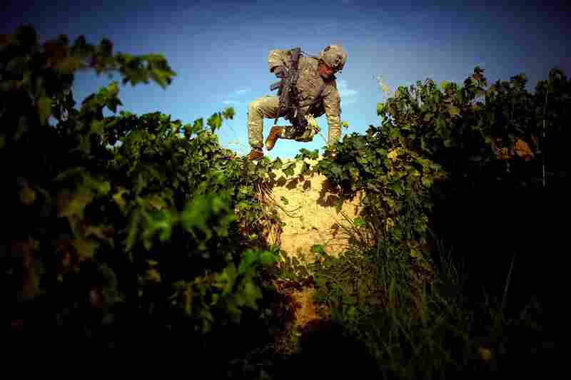 Pfc. James Turner scales an 8-foot-high mud wall. The terrain in the Pashmul area of Kandahar province makes patrolling difficult. Rows of grapevines stand 10 feet tall, and there is knee-deep mud between the rows. Taliban fighters move under the cover of the dense foliage, making the landscape seem more like a jungle than a desert.