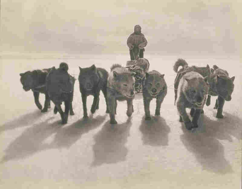 Huskies pull a sled during the first Australasian Antarctic Expedition, 1911-1914.