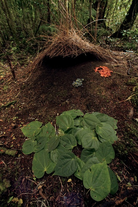 Need to redecorate hire a bowerbird the picture show npr - Good reasons need redecorate ...