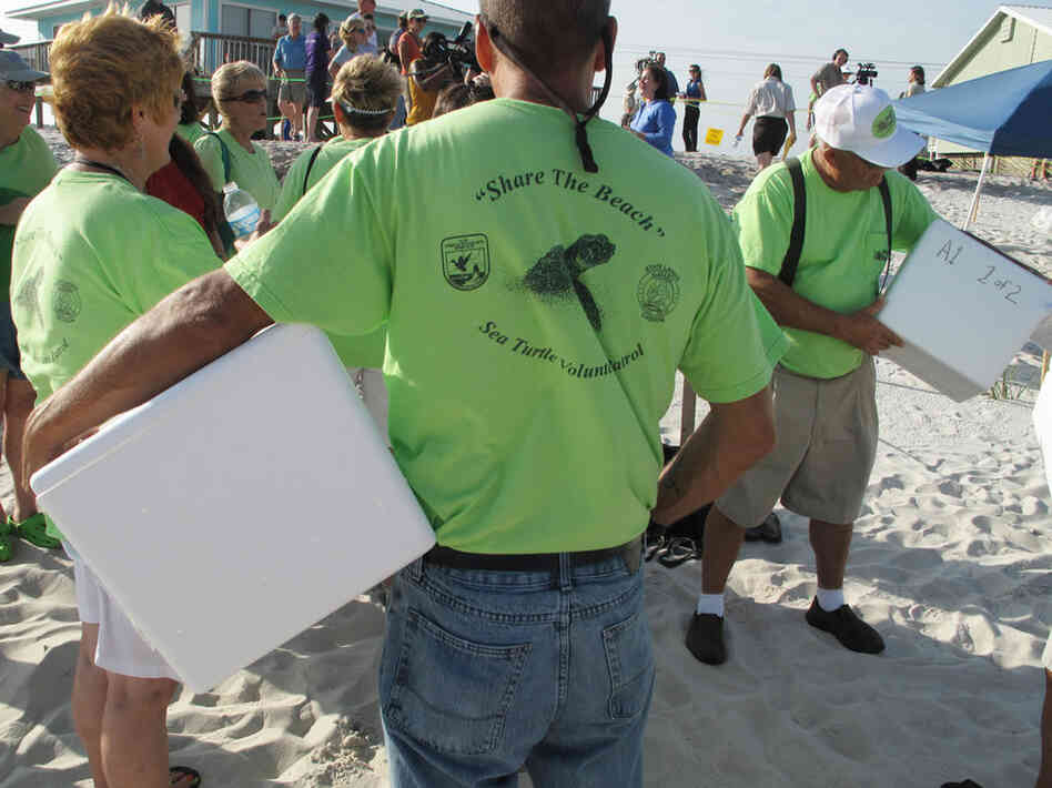 Volunteers ready special foam containers used to pack up sea turtle eggs being excavated from a nest in Gulf Shores, Ala. Federal officials plan to move up to 800 nests from Alabama and northern Florida to protect hatchlings from oil in the Gulf.