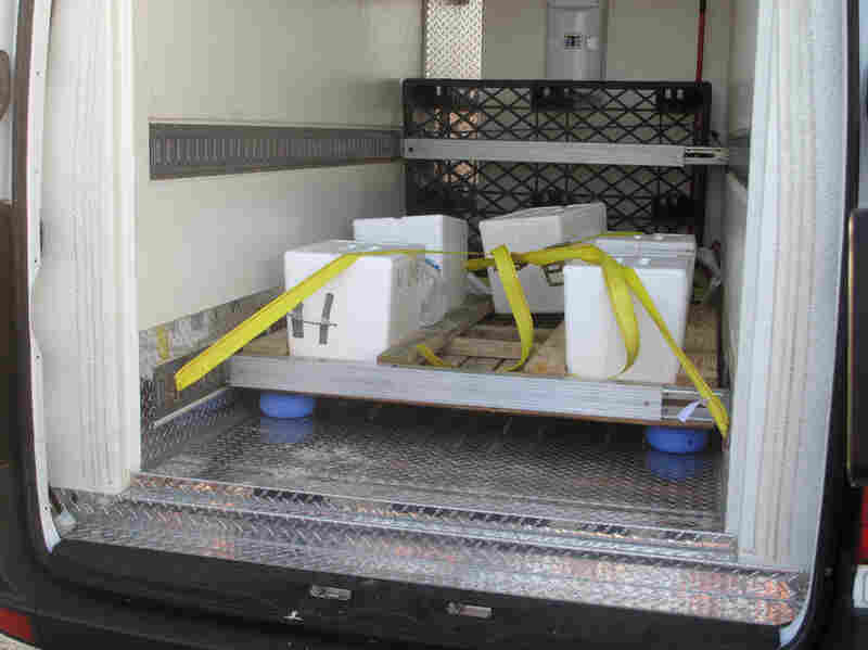The sea turtle egg containers are strapped into special tracks in a FedEx Custom Critical temperature-controlled van.
