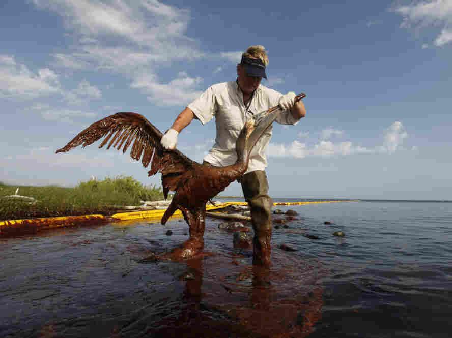 Pelican Oil Spill