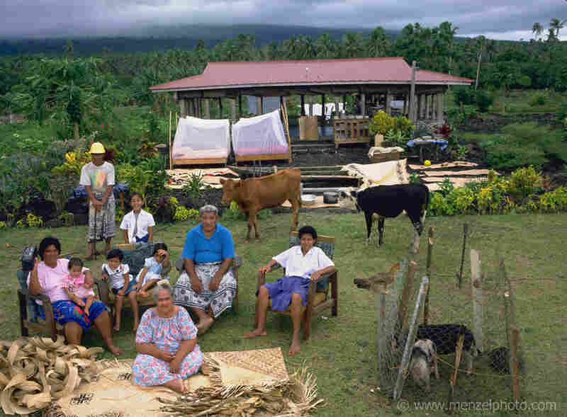 The Lagavale family lives in a small tin-roofed open-air house in Poutasi Village, Western Samoa. The Lagavales have pigs, chickens, a few calves, fruit trees and a vegetable garden. They farm, fish and make crafts to support themselves. They also work for others locally, which helps supplement their modest needs.