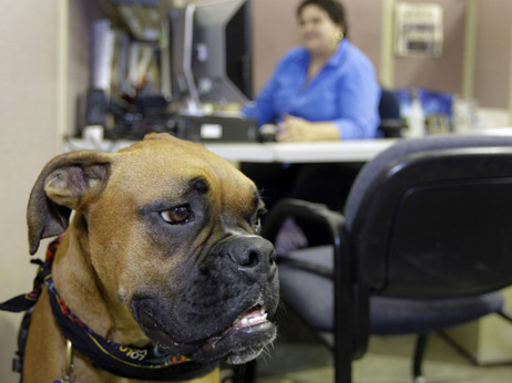 workplace dog
