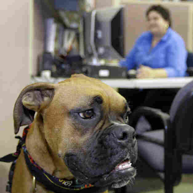 Improving Workplace Collaboration Requires A Dog