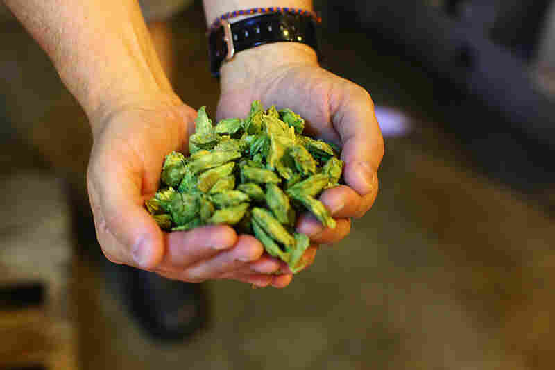 Bright green citra hops give Strumke's beer a citrus flavor.