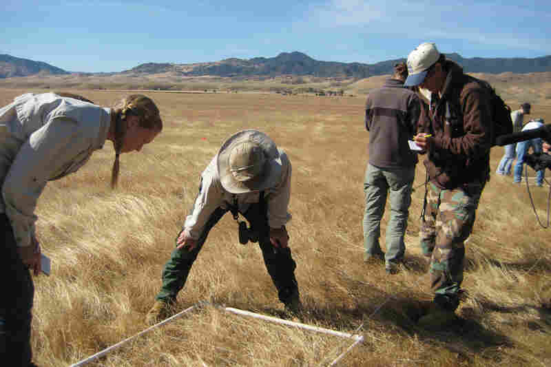 A team of biologists is currently performing surveys of nearly 5,000 acres in the valley, searching for signs of endangered species. The surveys are required by state law.