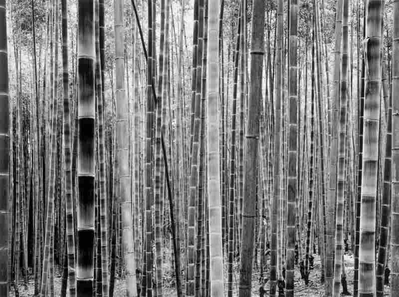 Untitled, 1999 from the series Bamboo