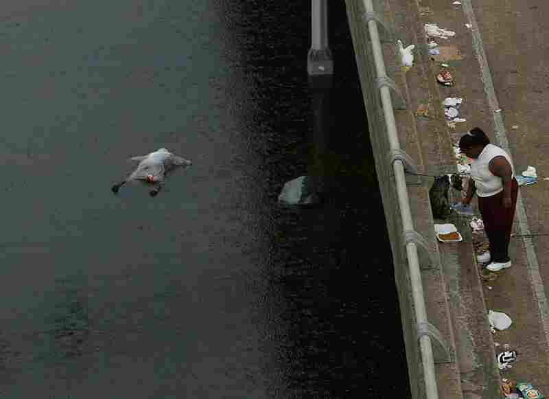 A body floats in the floodwaters of New Orleans in the aftermath of Hurricane Katrina on Sept. 1, 2005.