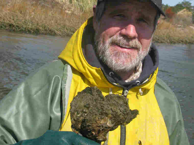 Tommy Leggett, an oyster farmer, with oysters