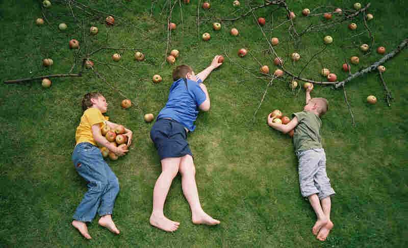 The Apple Raiders