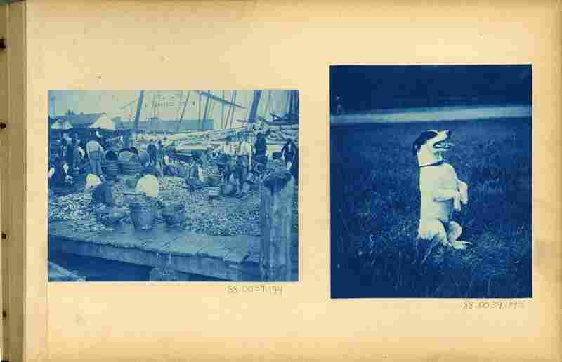 As photography became even more accessible, cyanotypes were an inexpensive way to make prints. The photographer of this 1893–94 album would place negative and paper in direct contact, expose to light, and rinse with water when the image emerged.