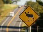 Moose crossing sign along Rt. 1 near Presque Isle, Maine. Carl D. Walsh For NPR