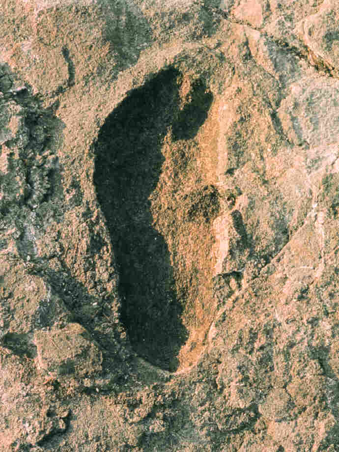 Laetoli fossilized hominid footprint