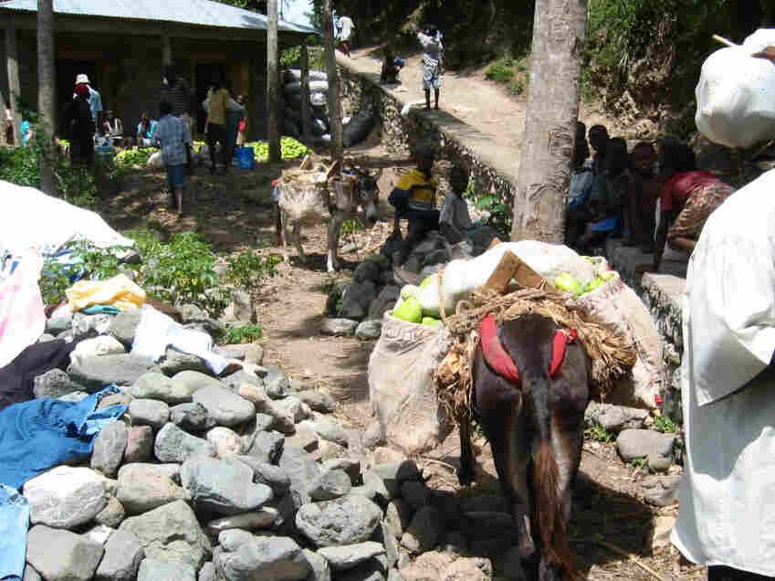 A donkey carries mangos.