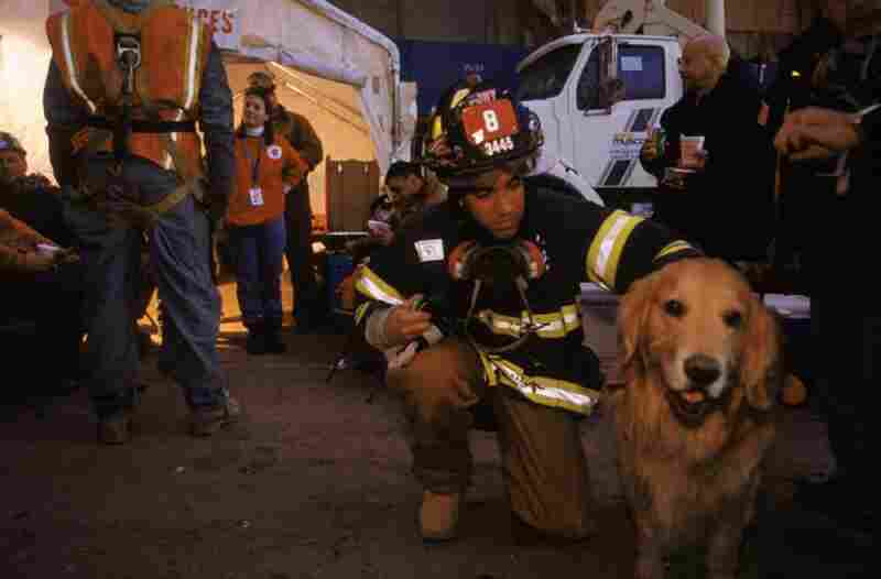 Nikie, a therapy dog from the K-9 Disaster Relief organization, with a fireman from Ladder Company 8, Tribeca, New York City
