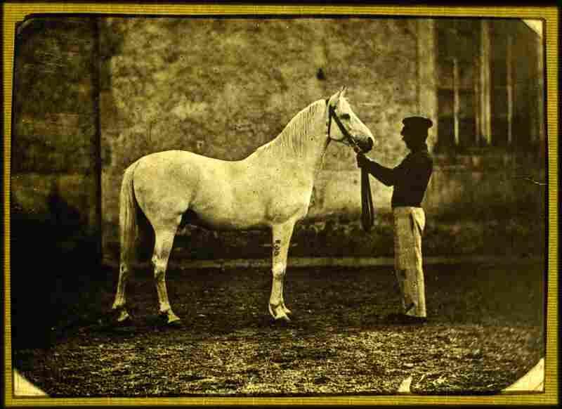 Man and Horse, circa 1852