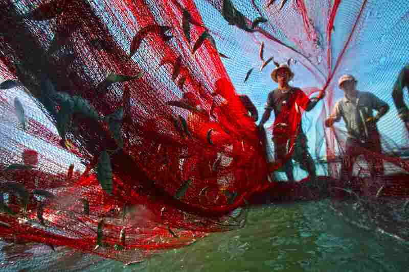 Goal 1: Eradicate extreme poverty and hunger Winner: Fishermen bring in the daily catch in southeastern Vietnam.
