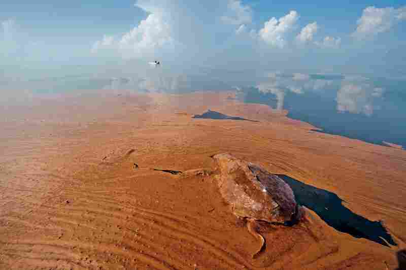 Coated in oil, a dead sea turtle lies in oil-fouled Barataria Bay, La. More than 500 sea turtles died in the spill area. As of Aug. 2, eggs from 134 turtle nests had been moved to oil-free beaches and 2,134 hatchlings released.