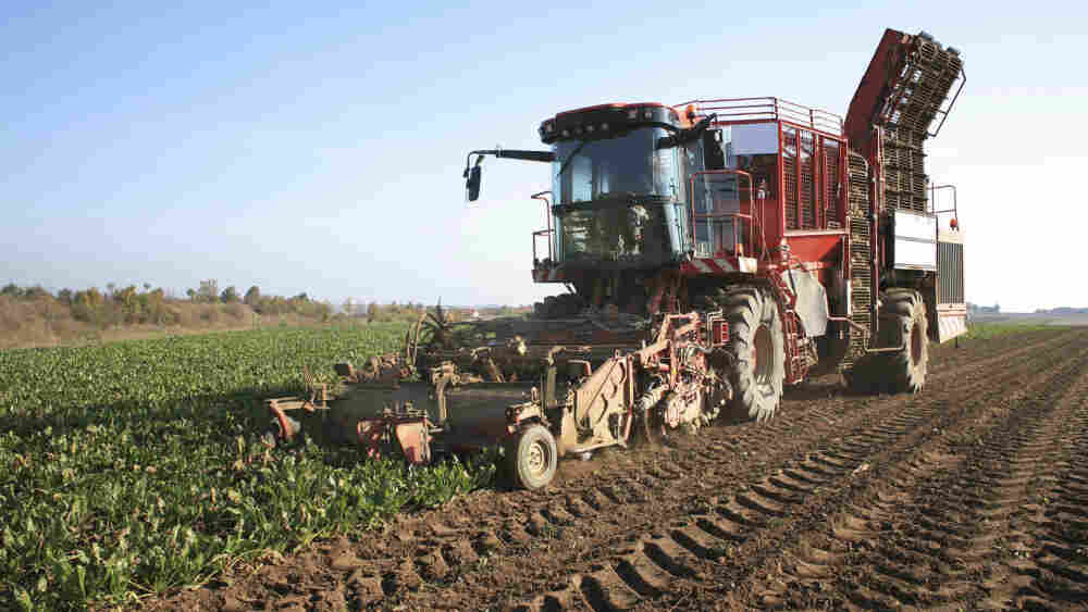 Sugar beet harvester in a field
