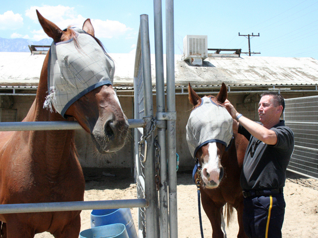 Officer Marc Melanson cares for horses at the Palm Springs Mounted Unit, which he founded.