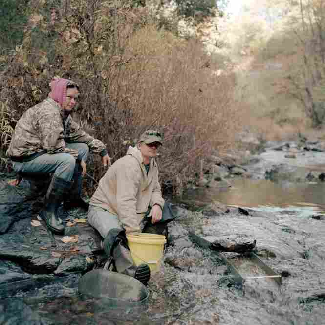 Prospectors Rich and Elizabeth Rang sluice materials on the Stanislaus River, Columbia, Calif.