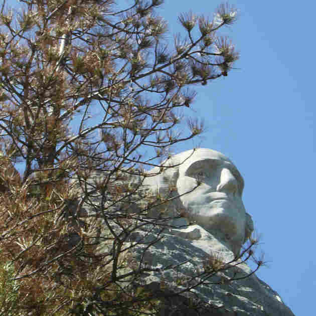 Forest Near Mount Rushmore Suffers Beetle Attack