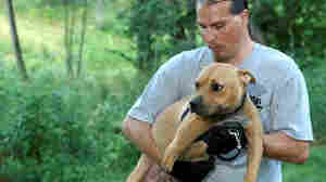 During a raid on a Missouri dogfighting ring, Tim Rickey of the ASPCA holds Dharma, a pit bull.